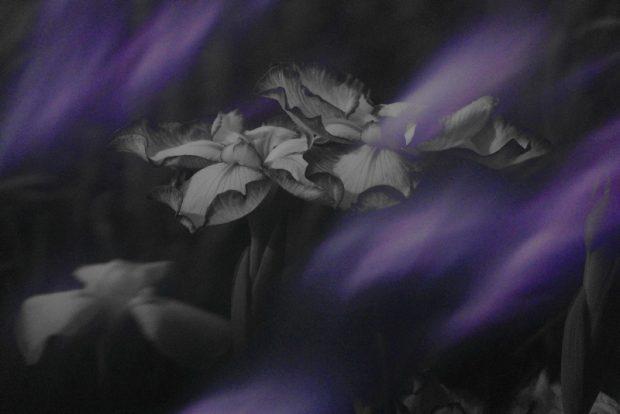 萩本雅子の作品