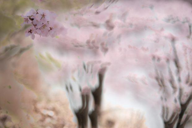 戸塚宣子の作品