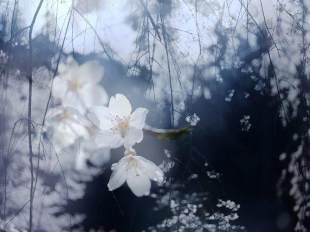 小島隆治の作品