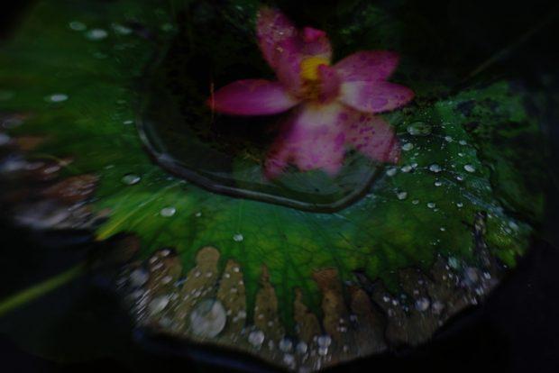 並木洋子の作品